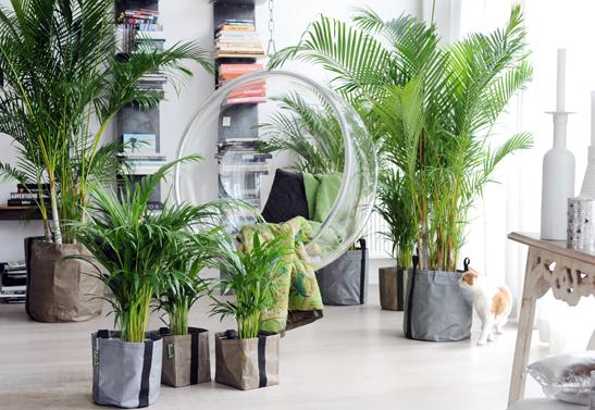 areca-plante-interieur-salon