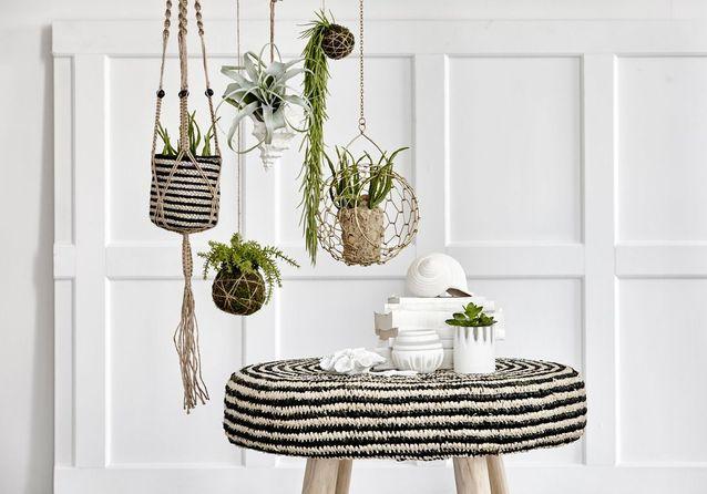 decoration-vegetale-interieure-salon