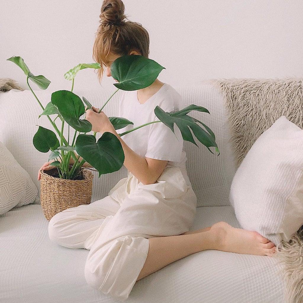 plantes-vertes-interieur-salon
