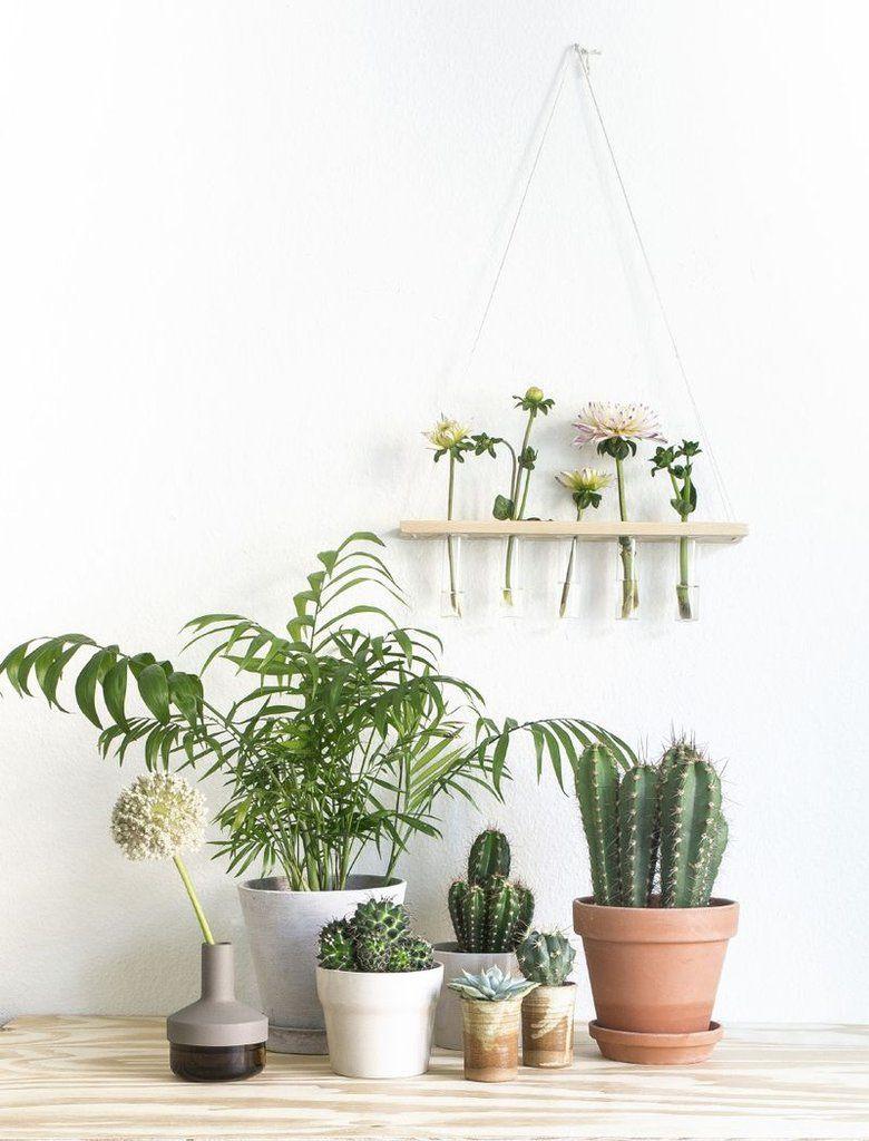 plantes-vertes-interieur
