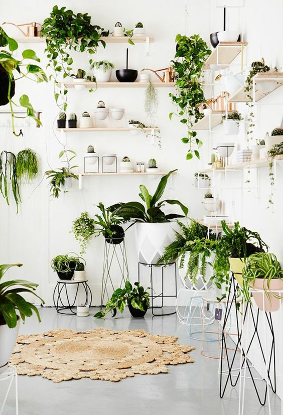 plantes-vertes-salon