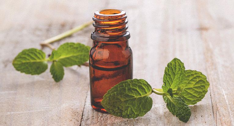 huile-essentielle-poivree-repulsif-naturel-contre-araignees