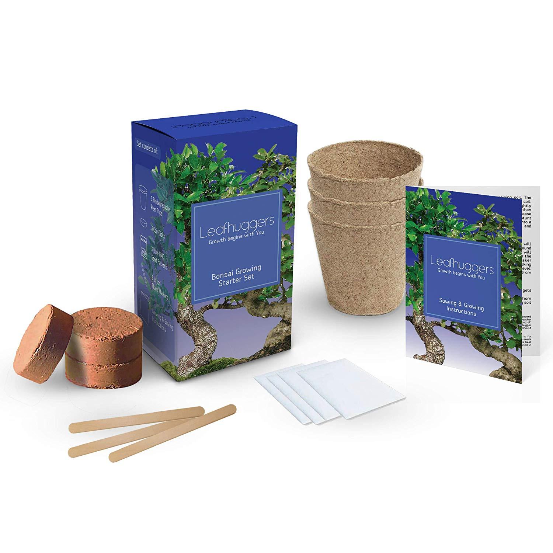 kit-bonsai-pret-a-planter