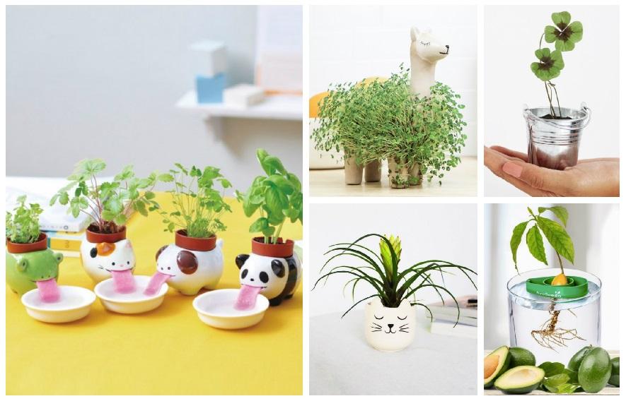 idees-cadeau-plantes