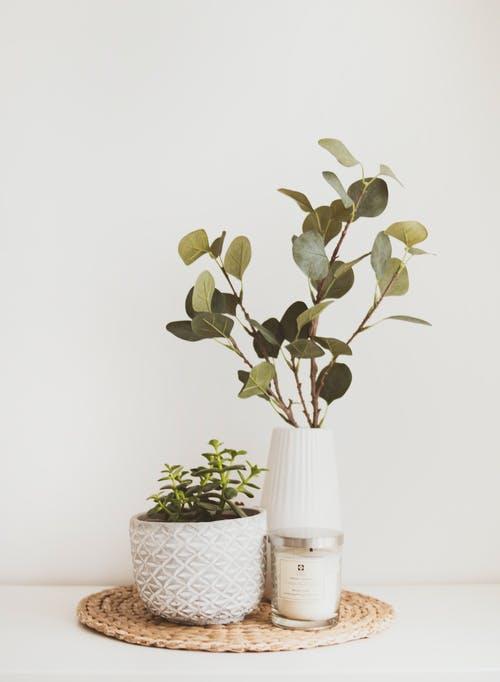 idee-deco-plantes