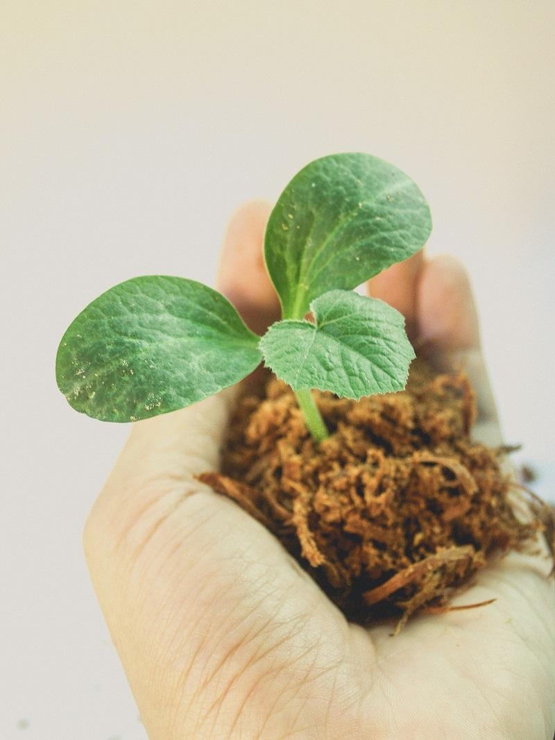 jardinage-pousse-verte