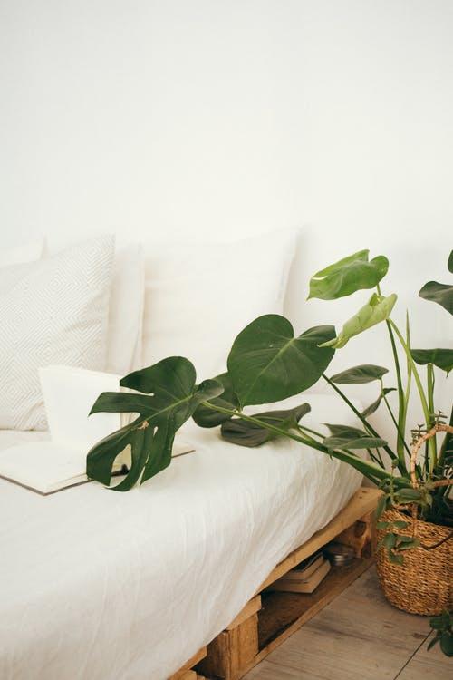 plante-lit
