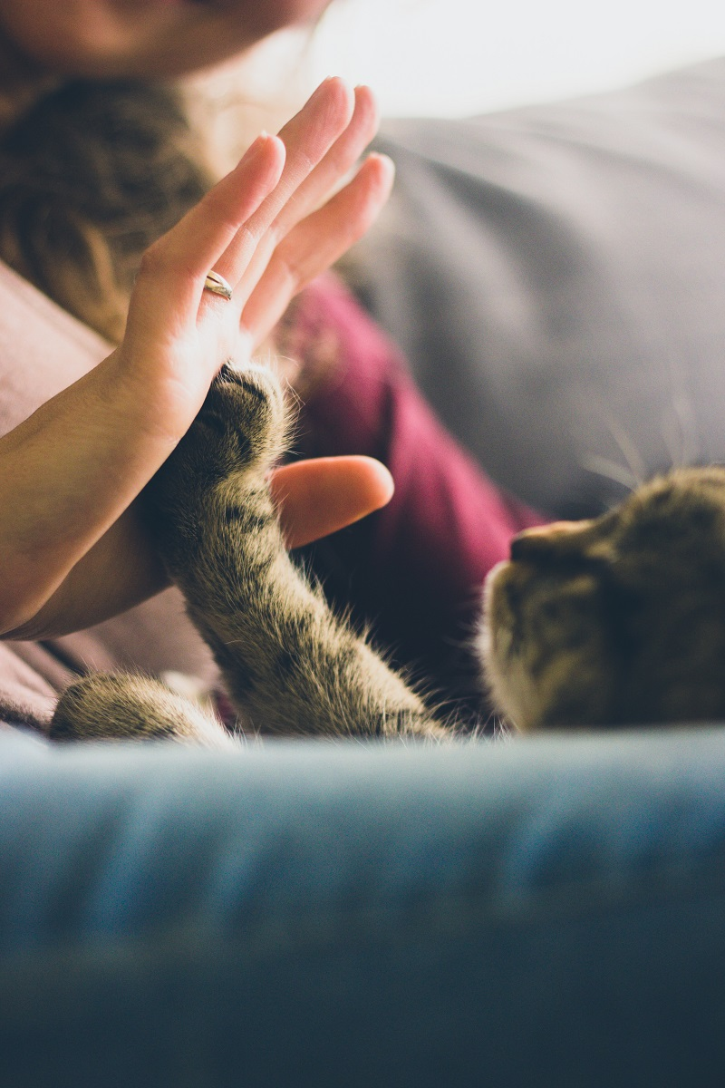 jouer-avec-son-chaton