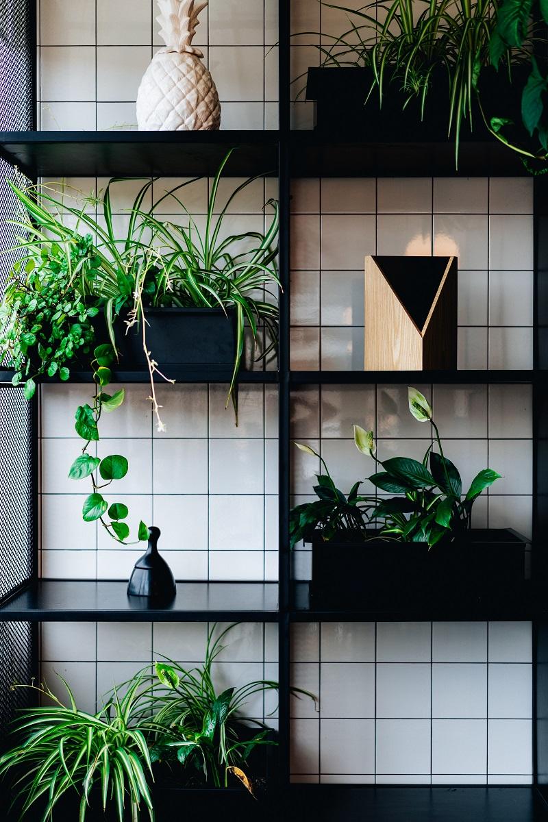 etageres-plante-verte