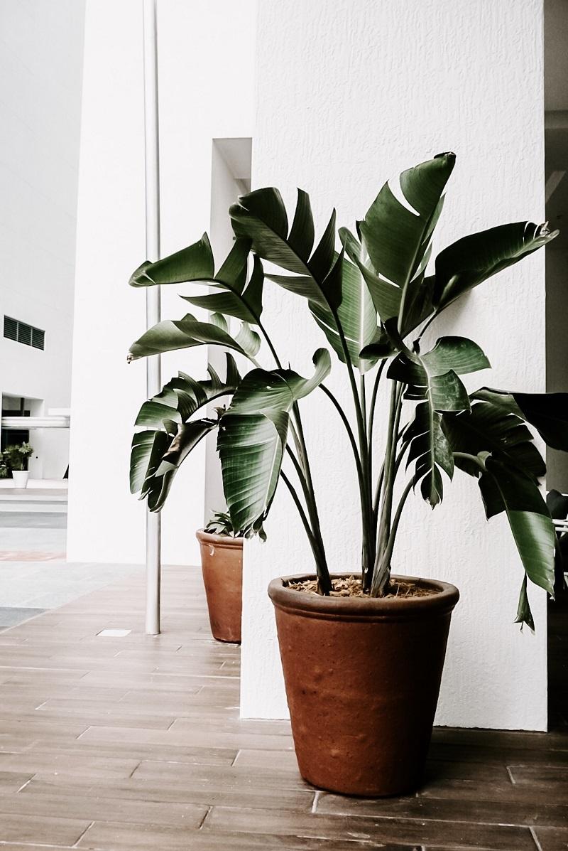 gros-pot-plante-verte