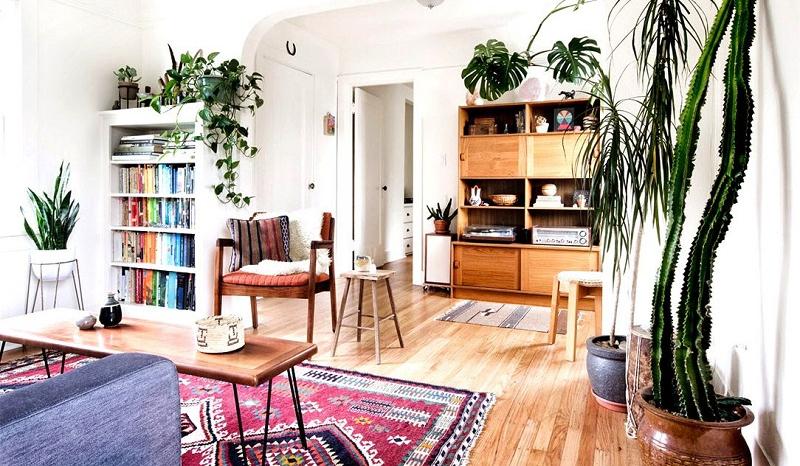 Les 8 Meilleures Plantes D Interieur Pour Votre Salon So Busy Girls