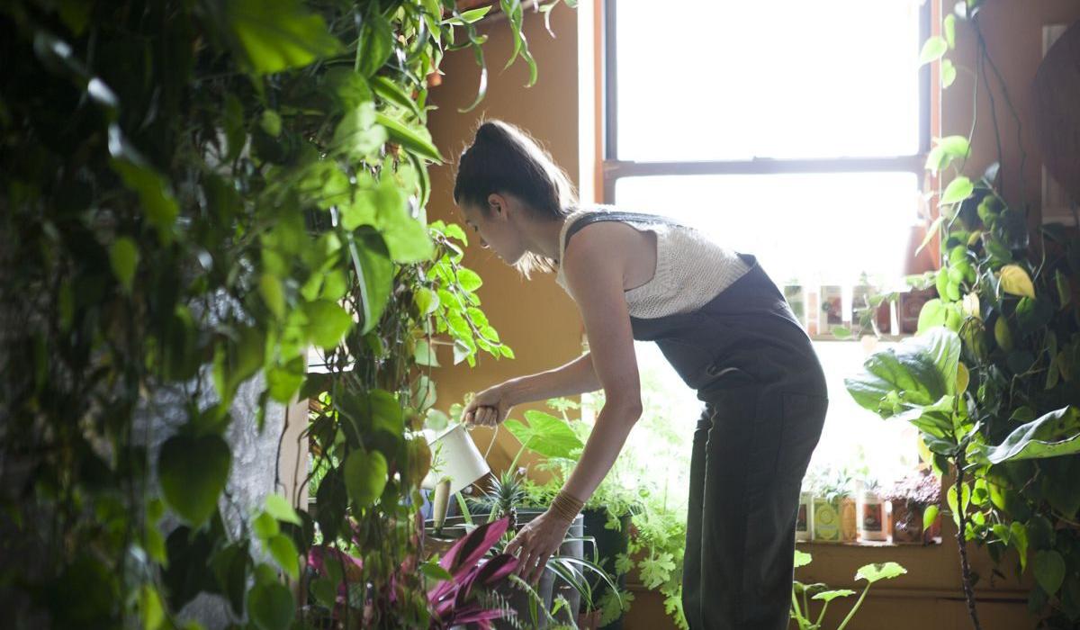 Cette jeune femme a plant plus de 500 plantes dans son - Plante verte d appartement ...