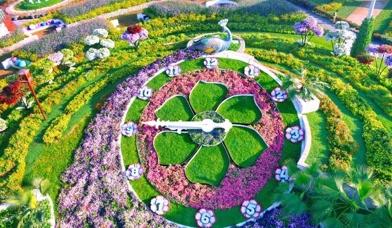 Découvrez le Dubaï Miracle Garden, le plus grand jardin de fleurs du ...