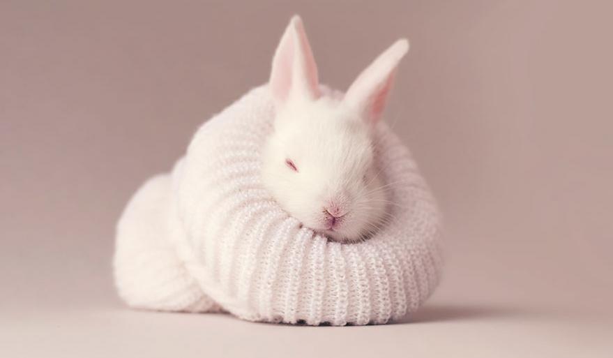 Super Ce bébé lapin est tellement mignon que vous allez vouloir le même  ZE13