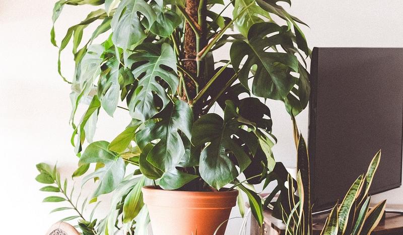 Cette étude montre comment les plantes peuvent améliorer