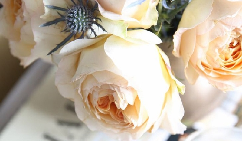 5 conseils simples pour faire durer les roses plus - Comment faire pour durer plus longtemps au lit ...